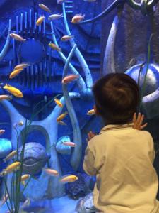 dete-akvarijum