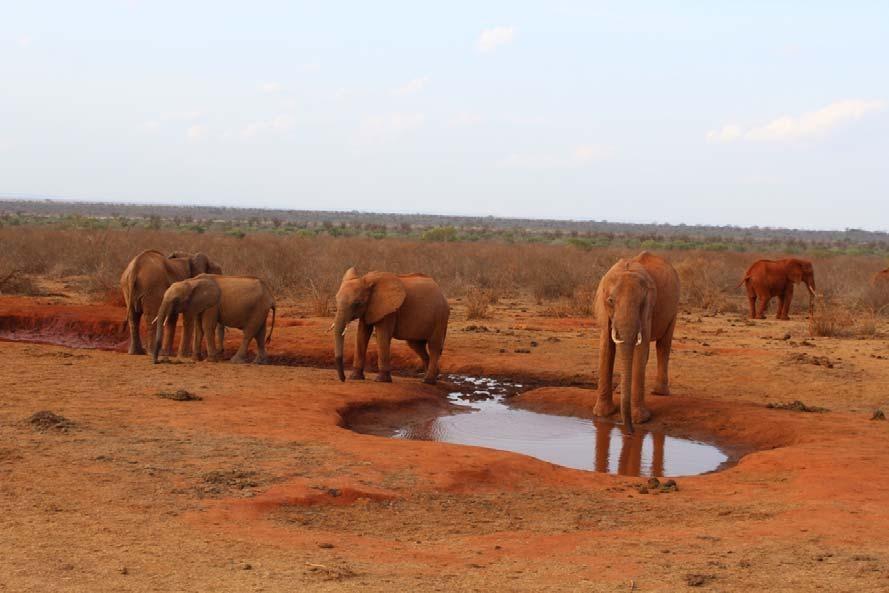 kenija safari slonovi