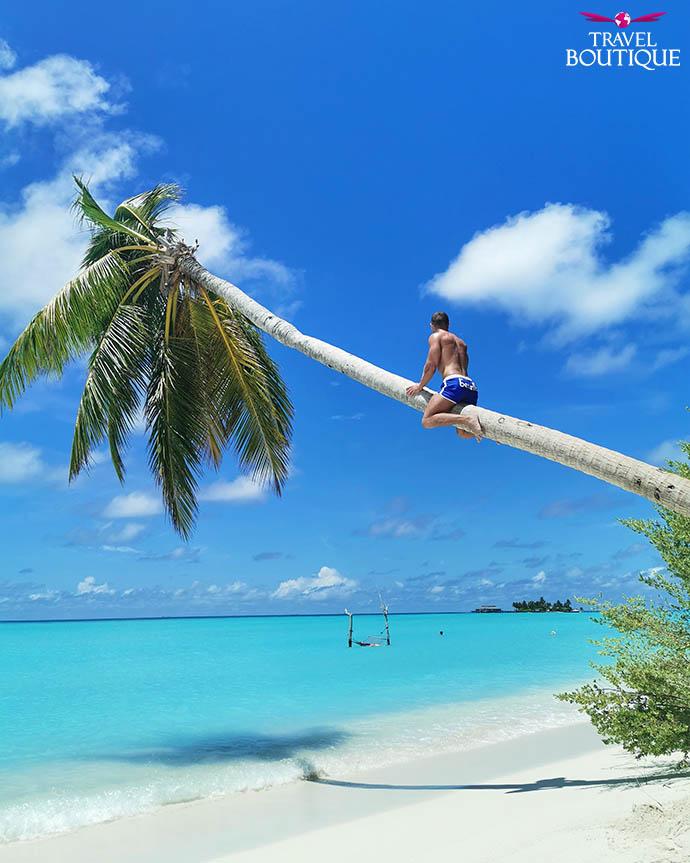 Maldivi palme