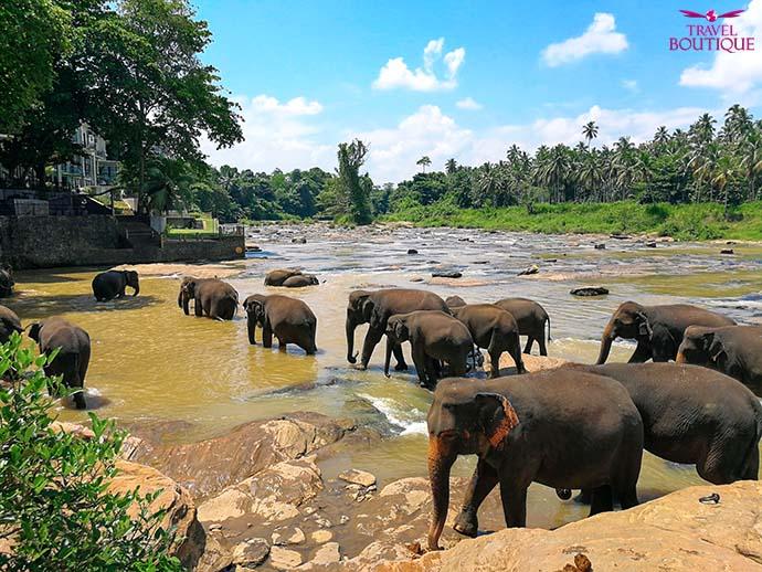 Šri Lanka 4