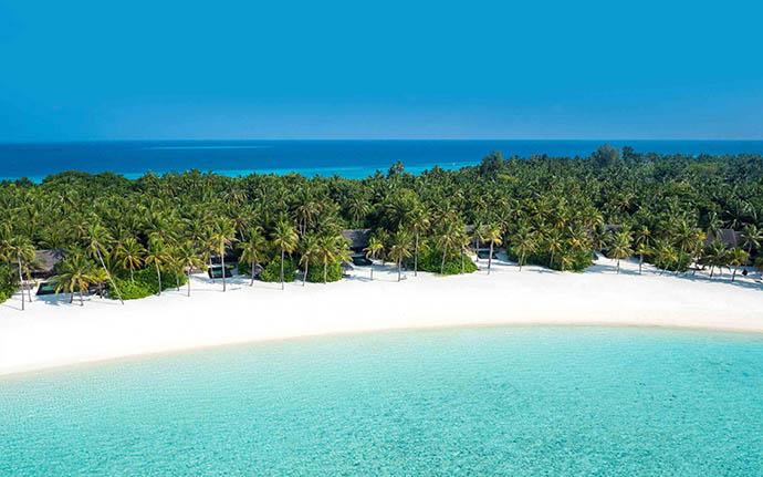 šuma palmi na plaži