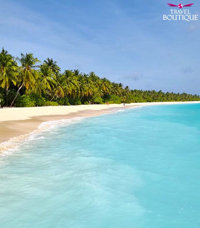 dugačak red palmi na plaži