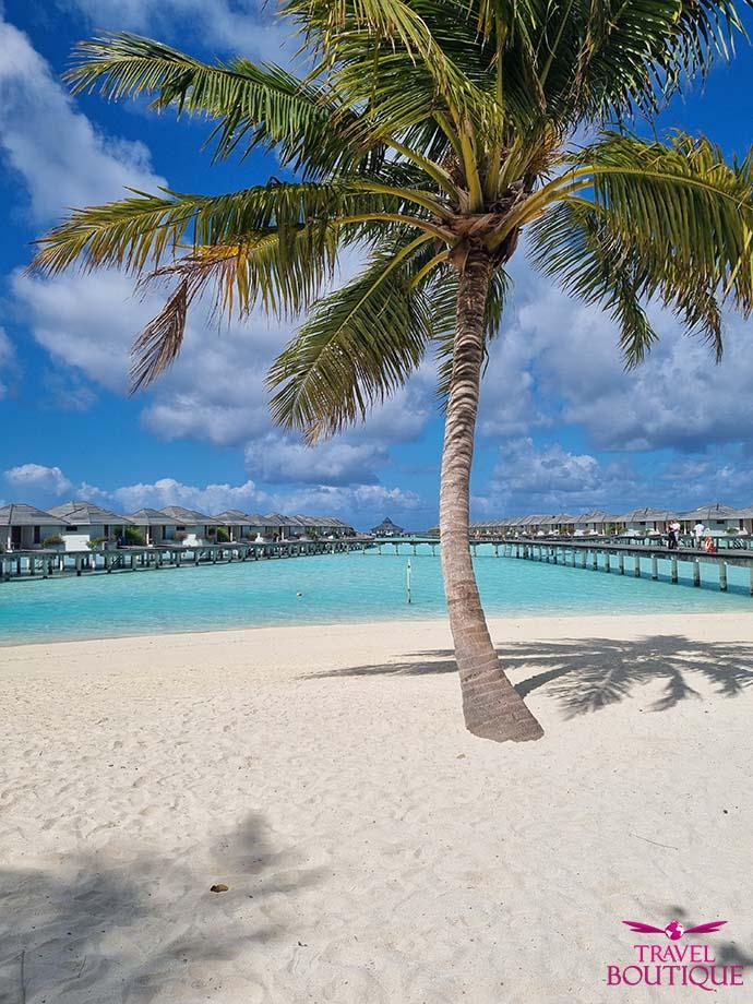 palma na plaži na Maldivima